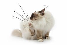 Flohmittel Katze