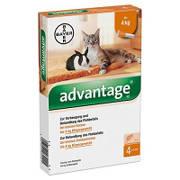 Advantage für Katzen bei Katzenflöhen